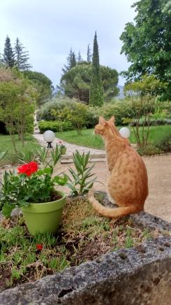 Le chat surveille