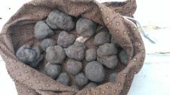 Les truffes, or noir
